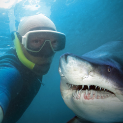 dnews-files-2015-09-selfie-shark-250x250